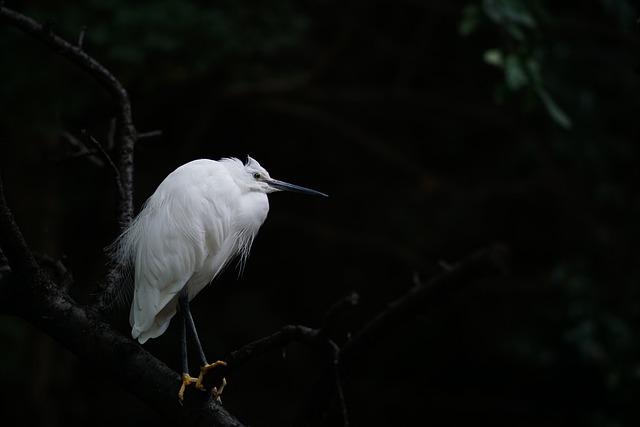 Heron, Bird, Wildlife, Nature, Black Natural