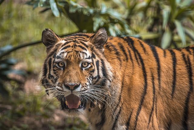 Wildlife, Cat, Carnivore, Predator