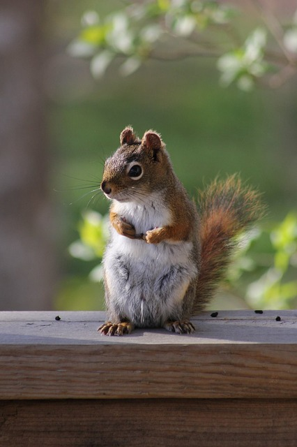 Cute, Mammal, Squirrel, Wildlife, Wood