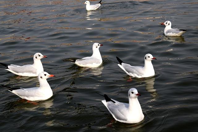 Bird, Water, Wildlife, Nature, Duck, River, Pond