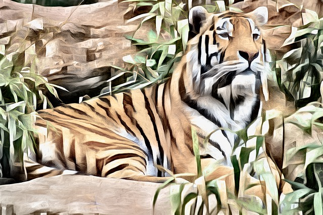Tiger, Wildlife, Animal, Predator, Feline, Nature
