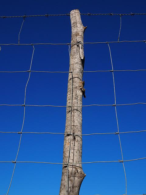 Post, Pile, Fence, Wildzaun, Wildlife Fence, Mesh