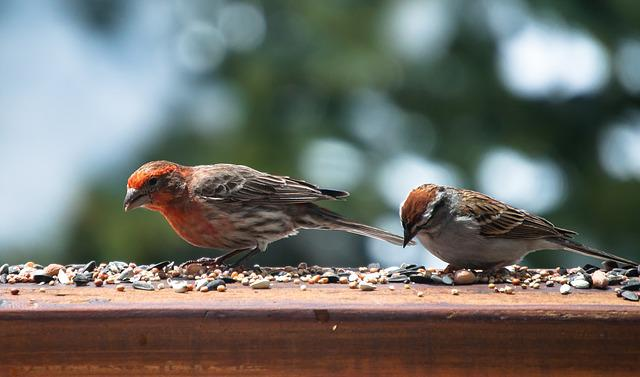 Bird, Finch, Feeding, Wildlife, Nature, Outdoors, Seeds