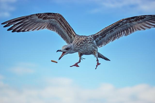 Bird, Nature, Wildlife, Flight, Wings, Animal, Free