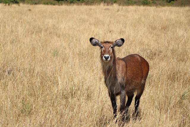 Mammal, Grass, Field, Hayfield, Wildlife
