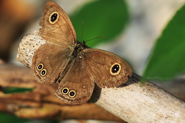 Nature, Animal, Wildlife, Insect, Butterfly, Wild