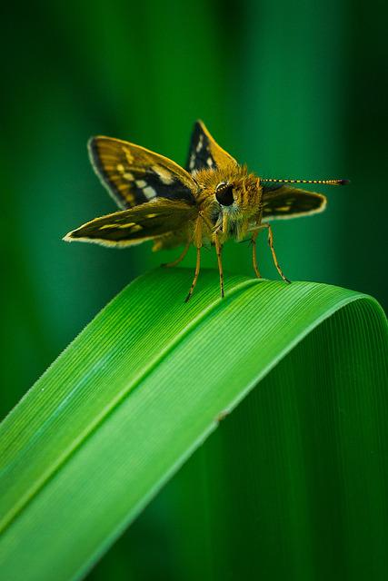 Insect, Nature, Butterfly, Animal, Wildlife, Closeup