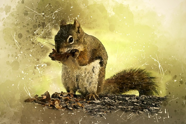 Squirrel, Animal, Mammal, Wildlife, Eating, Sitting
