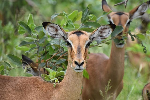 Nature, Mammal, Wildlife, Animal, Grass