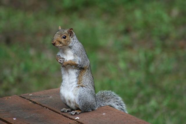 Mammal, Squirrel, Nature, Cute, Rodent, Wildlife