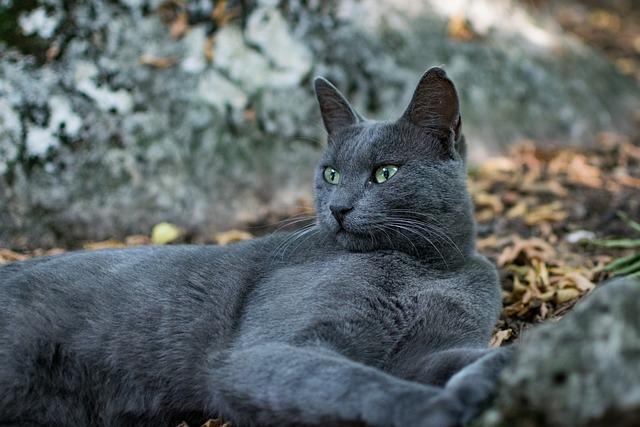 Nature, Animal, Mammal, Outdoors, Wildlife, Cute, Cat