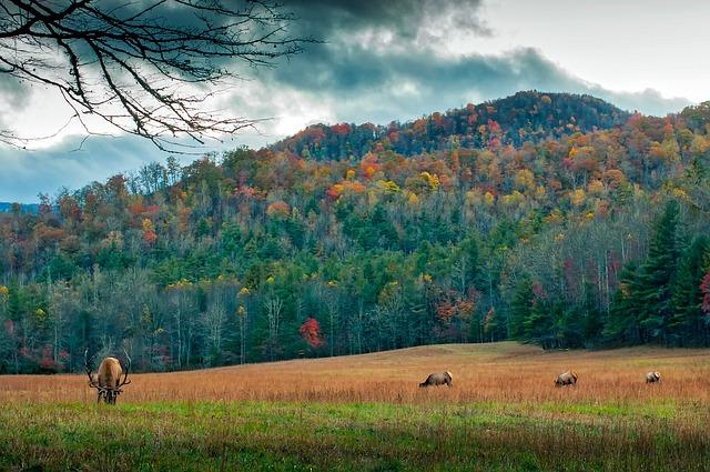 North Carolina, Meadow, Deer, Elk, Wildlife, Animals