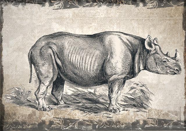 Rhino, Rhinoceros, Wildlife, Animal, Wild, Nature