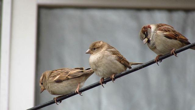 Birds, Nature, Wildlife, Animals, Outdoor
