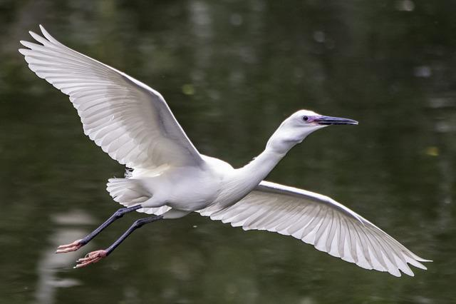Bird, Wildlife, Nature, Feather, Animal, Wing, Beak