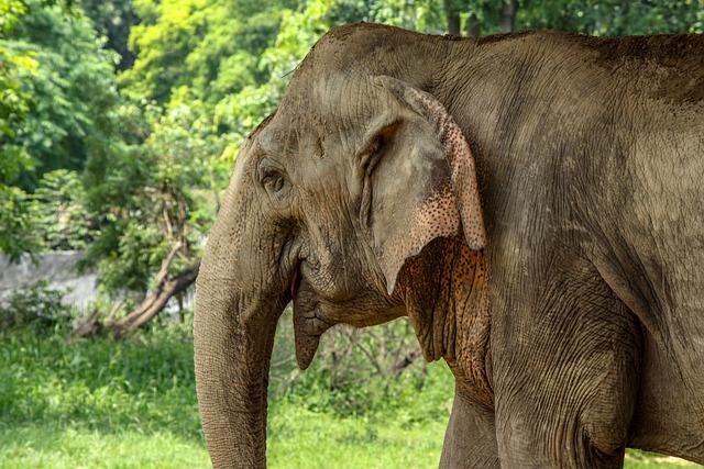 Elephant, Zoo, Nature, Mammal, Safari, Wildlife