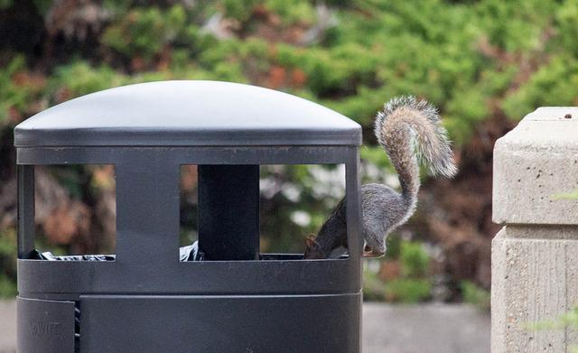 Nature, Squirrel, Trash, Fall, Wildlife