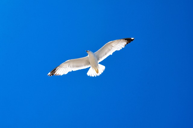 Nature, Outdoors, Bird, Sky, Wildlife, Flight, Seagulls