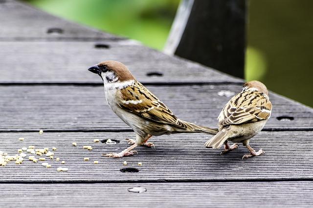 Bird, Nature, Wildlife, Animal, Outdoors, Wing, Wild
