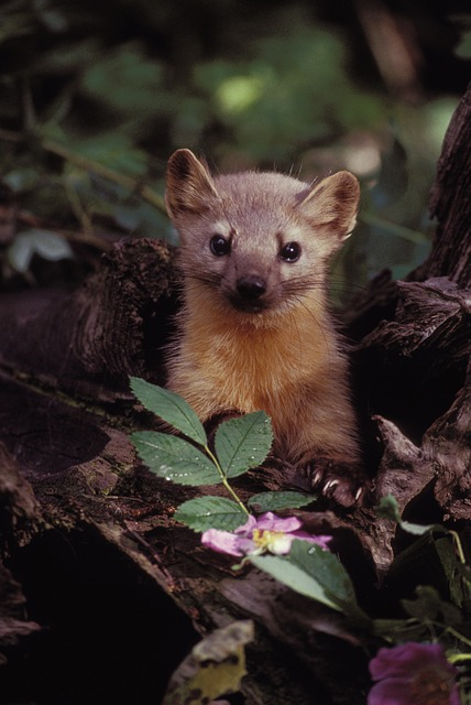 Marten, Wildlife, Plants, Branches, Nature, Outside