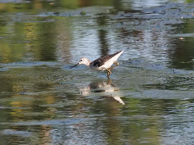 Bird, Water, Lake, Wildlife, Pool, Nature, Outdoors