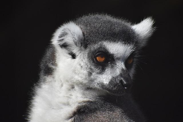Mammal, Wildlife, Primate, Monkey, Cute