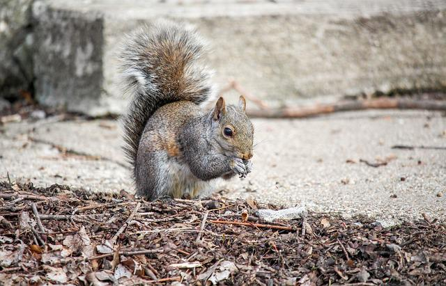 Nature, Rodent, Wildlife, Mammal, Cute, Squirrel