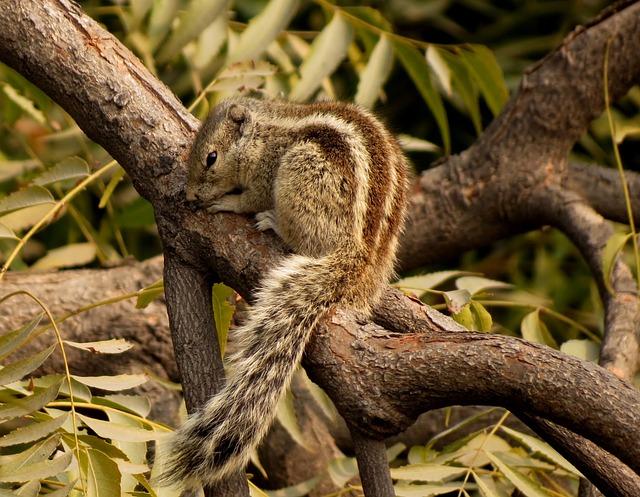 Chipmunk, Tree, Rodent, Animal, Nature, Wildlife
