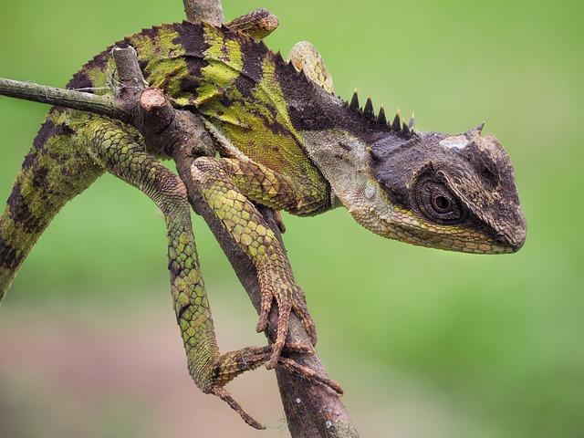 Wildlife, Salamanders Emma, Cuc Phuong National Park