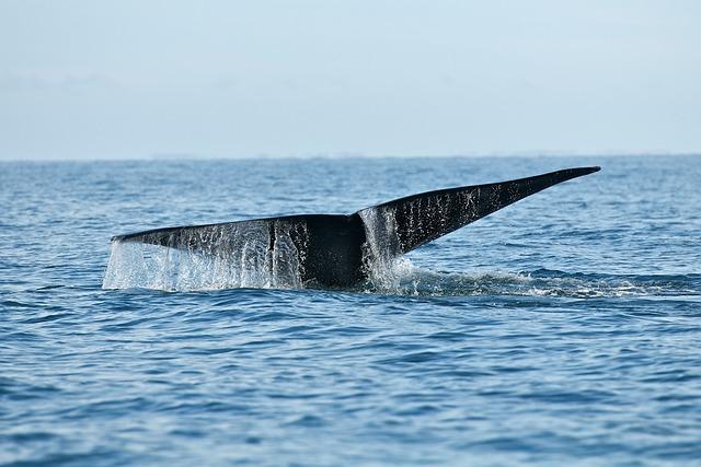 Whale, Wildlife, Sea, Ocean, Mammal, Humpback, Marine