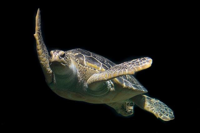Turtle, Green, Sea, Ocean, Animal, Wildlife, Underwater