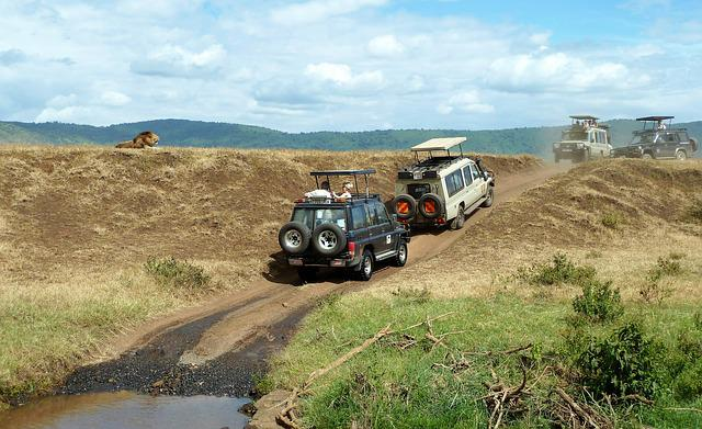 Safari, Wildlife Watching, Jeep, Lion, Off Road
