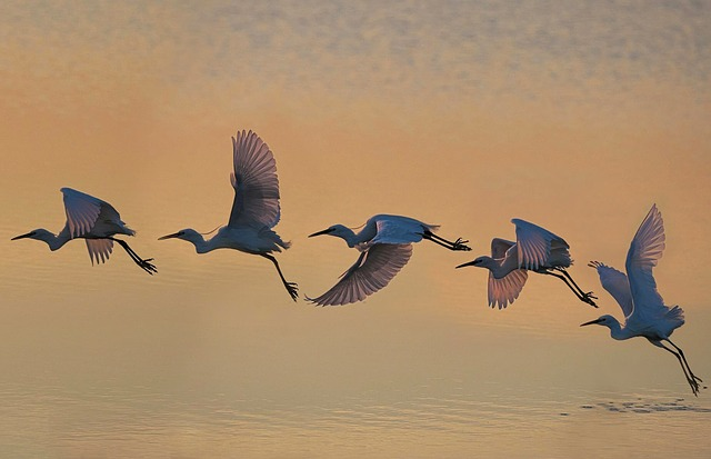 Bird, Wildlife, Flight, Water, Nature, Fly