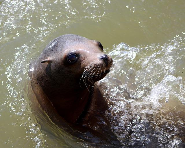 Sea Lion, Water, Sea, Lion, Wildlife, Nature, Animal