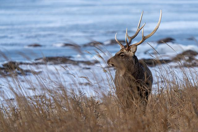 Deer, Animal, Sea, Mammal, Nature, Wildlife, Stag, Wild