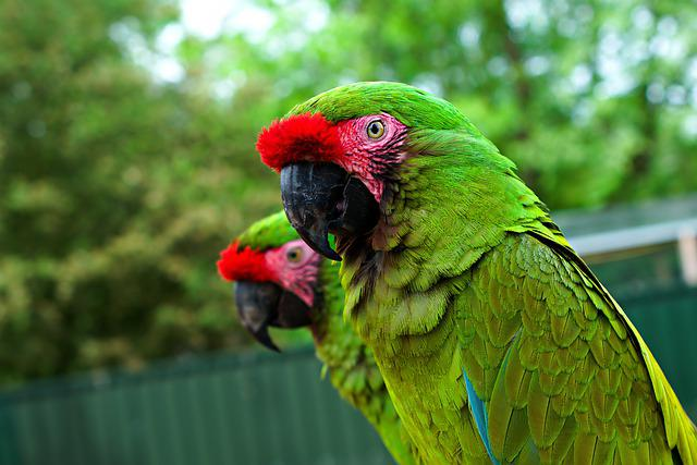 Hyacinth, Macaw, Parrot, Wildlife, Colour, Plumage, Zoo
