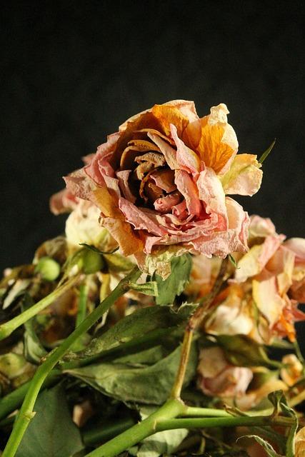 Flower, Flowers, Rose, Bouquet, Dry, Petal, Fade, Wilt