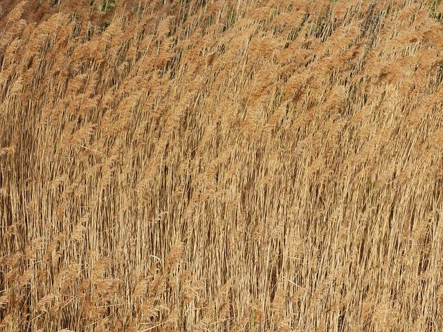 Cañas, River, Riparian Vegetation, Wind, Canamelar
