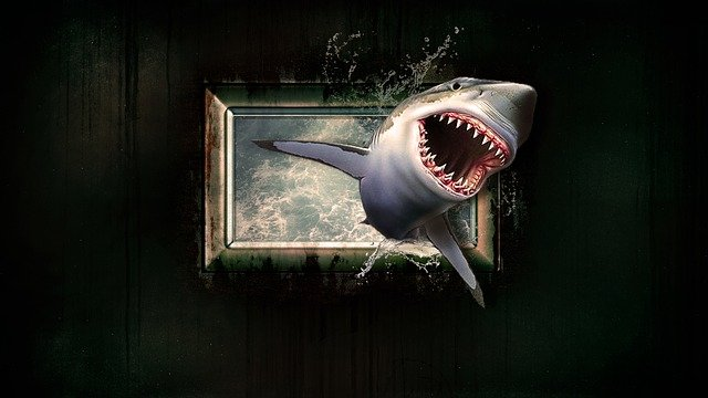 Shark, Wallpaper, Water, Sea, Window