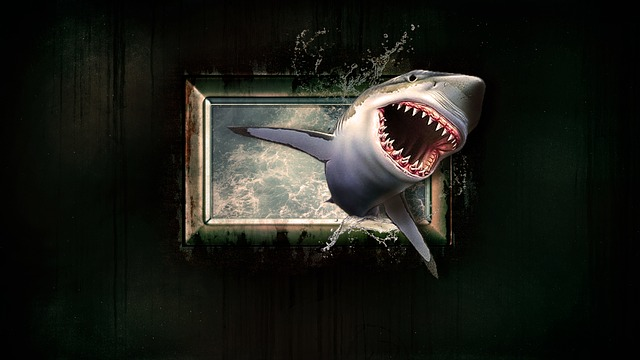 Shark, Wallpaper, Water, Sea, Window