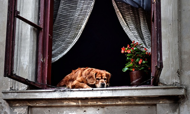 Window, Windows, Old House, Dog, Colored Houses