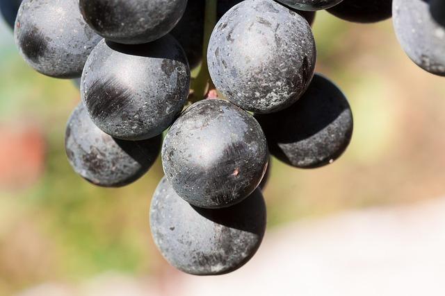 Wine, Grape, Wine Harvest, Plant, Autumn