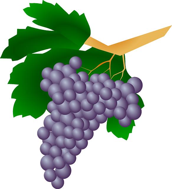 Grapes, Plant, Raisin, Wine, Fruit, Sweet, Berries