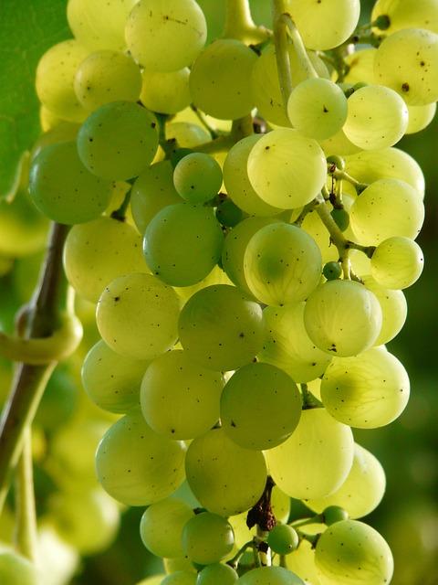Grapes, Wine, Plant, Plantation, Winegrowing, Green