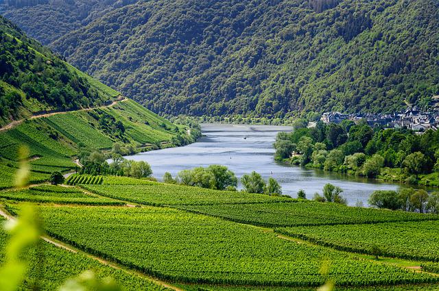 Mosel, River, Vineyards, Wine, Vines