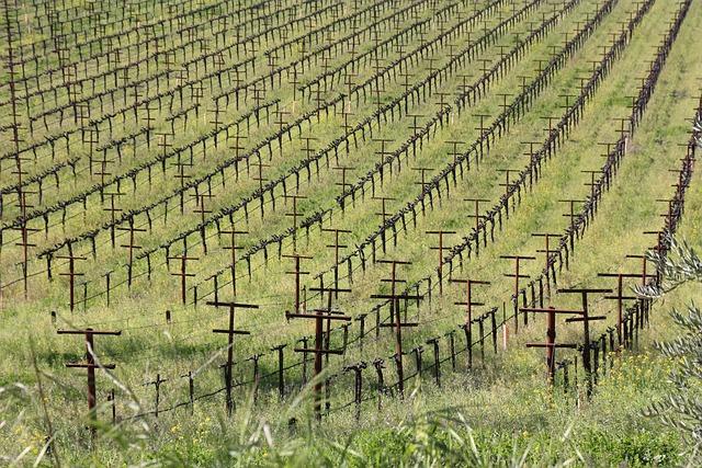Wine, The Vine, Winery, Wine Culture, Order, Green