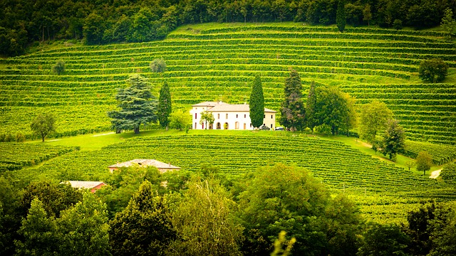 Italy, Winery, Vines, Vineyard, Landscape, Green