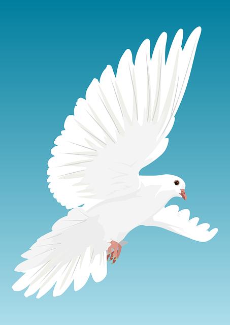 Dove, Bird, Birds, Feather, Nature, Animal, Wing