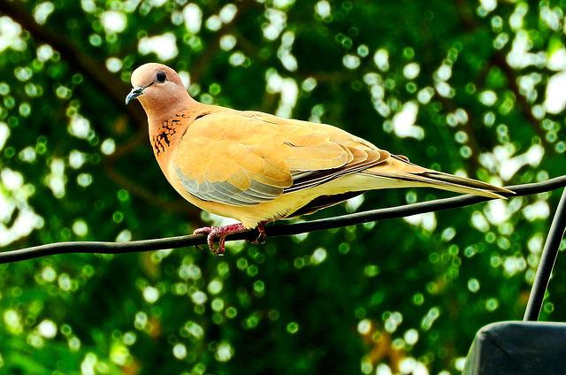 Dove, Bird, Peace, Wing, Nature, Feather