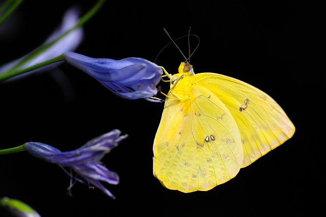 Butterfly, Insect, Colorful, Animal, Wing